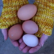 Are those really free-range eggs?