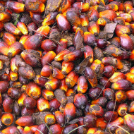 Palm oil – wassup with that sh*t?