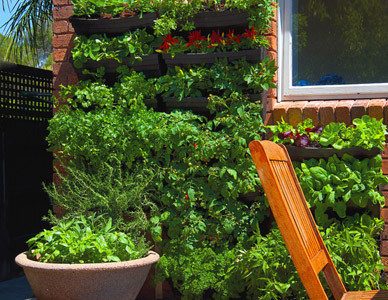 wall_garden_2_large__72070.1335492228.1280.1280