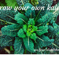 How to grow kale at home
